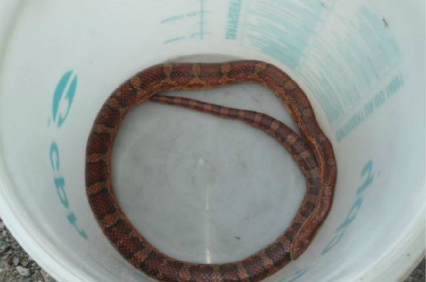 Wąż znaleziony przed posesją