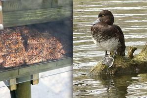 """Nie dokarmiaj ptaków chlebem - lepiej idź do """"kaczkomatu"""". Tam jest jedzenie, które nie szkodzi"""