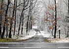 Manifest Wajraka: Lasy stworzyły sobie państwo