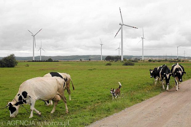 Czy Polska b�dzie demontowa� turbiny wiatrowe?
