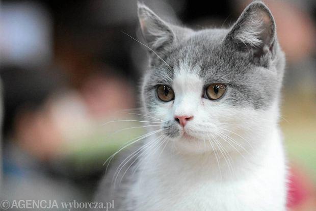 Koty, szczury, myszy i �winki morskie opanowa�y Ursyn�w