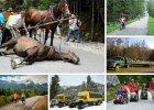 Hulajnog�, wozem z sianem, autobusem, ale nie koniem. Jak tury�ci na �wiecie poruszaj� si� po parkach narodowych
