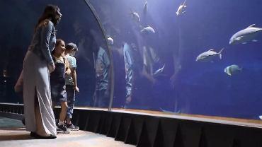 Wizualizacje parku rozrywki Nautilus, który powstaje w Gdańsku