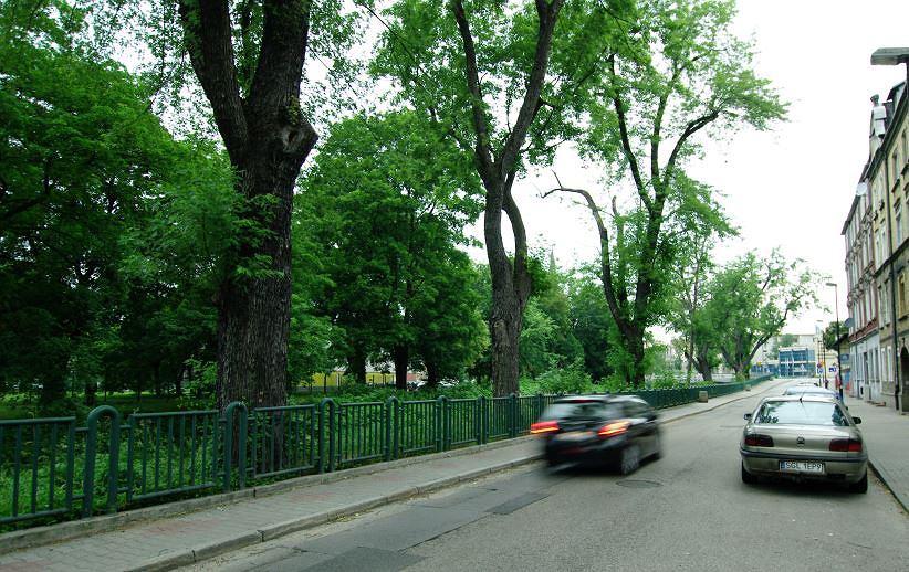 Klony przy ulicy Kłodnickiej w Gliwicach