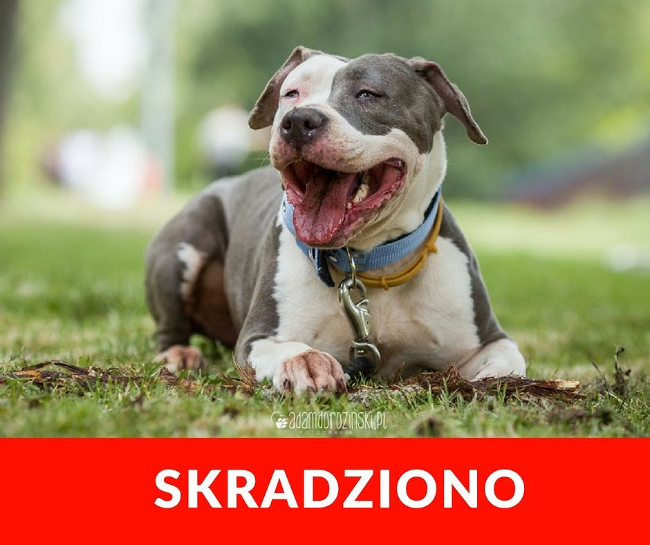 Ze Schroniska na Paluchu skradziono psa