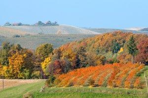 Latem na pla��, a jesieni� - na wino! Chorwacja kusi po sezonie