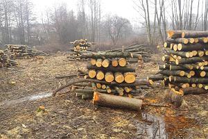 Wycinają drzewa na prywatnych działkach w Krakowie