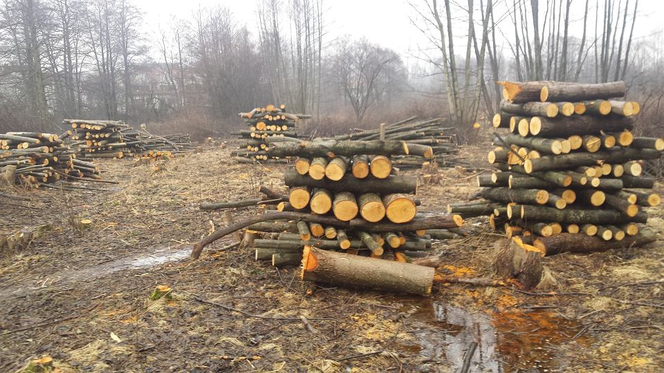 Wycinka w rejonie ul. Kobierzyńskiej na Ruczaju