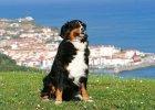 Pies w podr�y po Europie. 5 atrakcji turystycznych przyjaznych zwierz�tom
