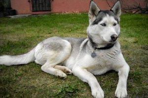 Zgubiony pies odnalazł się po 3,5 roku. Dzięki czipowi
