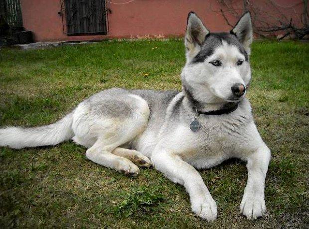 Zgubiony pies odnalaz� si� po 3,5 roku. Dzi�ki czipowi