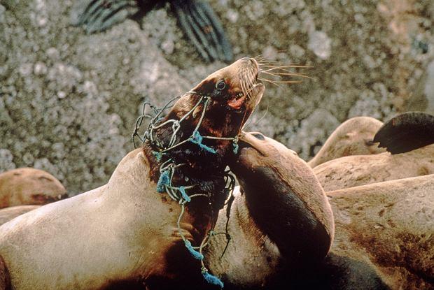 Zwierzęta ryzykują życie dla swych towarzyszy