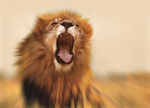 Parę kochanków zaskoczył w krzakach rozdrażniony lew, Top 10: seks i śmierć. Najdziwniejsze przypadki, top 10, seks, Uwaga na pojazdy i zwierzęta