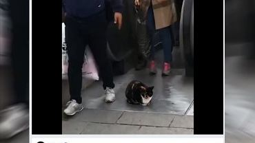 Kot |