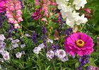 10 roślin, które wysiane szybko urosną