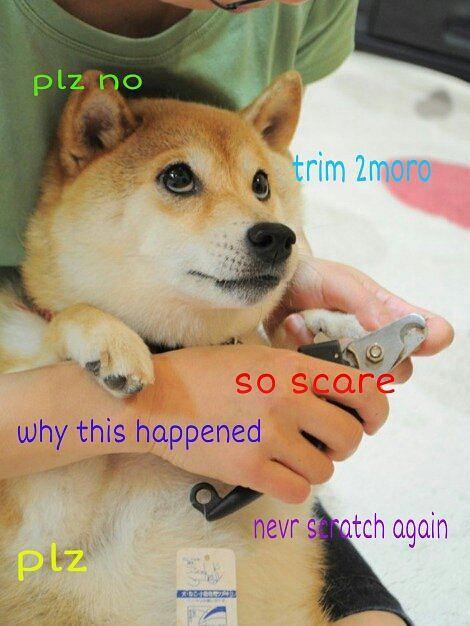 Doge Shibe, fot. Internet