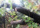 Park Ujazdowski zamknięty po burzy. Połamane drzewa, zniszczone latarnie