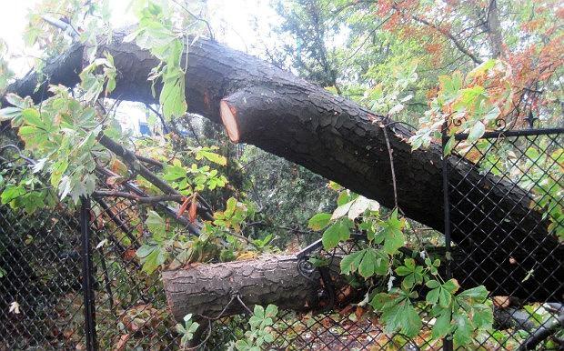 Park Ujazdowski zamkni�ty po burzy. Po�amane drzewa, zniszczone latarnie