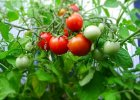 Jak w trzy lata zostać zielonym prosem - ogrodnictwo balkonowe i parapetowe w pięciu krokach
