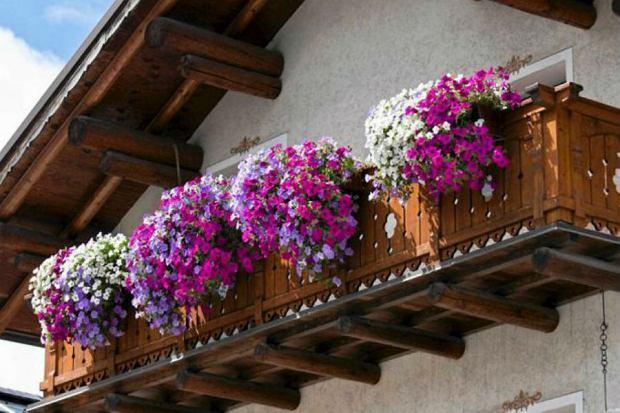 Najpopularniejsze ro�liny balkonowe. Jak je piel�gnowa�?