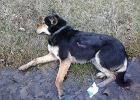"""Pracownicy schroniska ciągną po ziemi rannego psa. """"Do teraz mam w uszach jego skowyt!"""" [WIDEO]"""