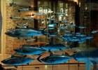 Zbudujmy wreszcie muzeum przyrodnicze - takie, jakie maj� Londyn, Berlin czy Nowy Jork!