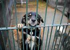 Chcesz pomóc zwierzakom? Możesz założyć dom tymczasowy
