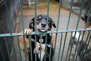Czipowanie i kastracja - sposoby samorządów na bezdomność zwierząt