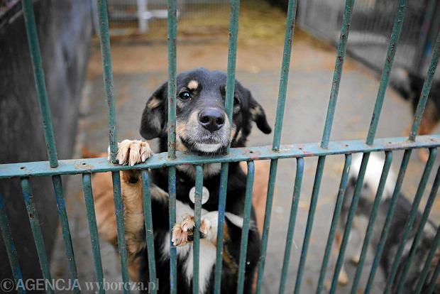 Czipowanie i kastracja - sposoby samorz�d�w na bezdomno�� zwierz�t