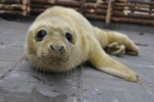 Uwaga! Ma�e foki na wybrze�ach Ba�tyku potrzebuj� spokoju