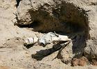 Poszukiwacze skarbów zniszczyli cmentarzysko. Zabrali metalowe przedmioty, obcięli łopatami nogi [ZDJĘCIA]