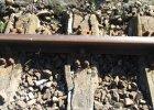 Pociągi wróciły na linię wyremontowaną dzięki hobbystom