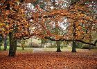 Ostatnie podrygi ciepłej jesieni. Czeka nas słoneczny weekend, a później wiatr i deszcz