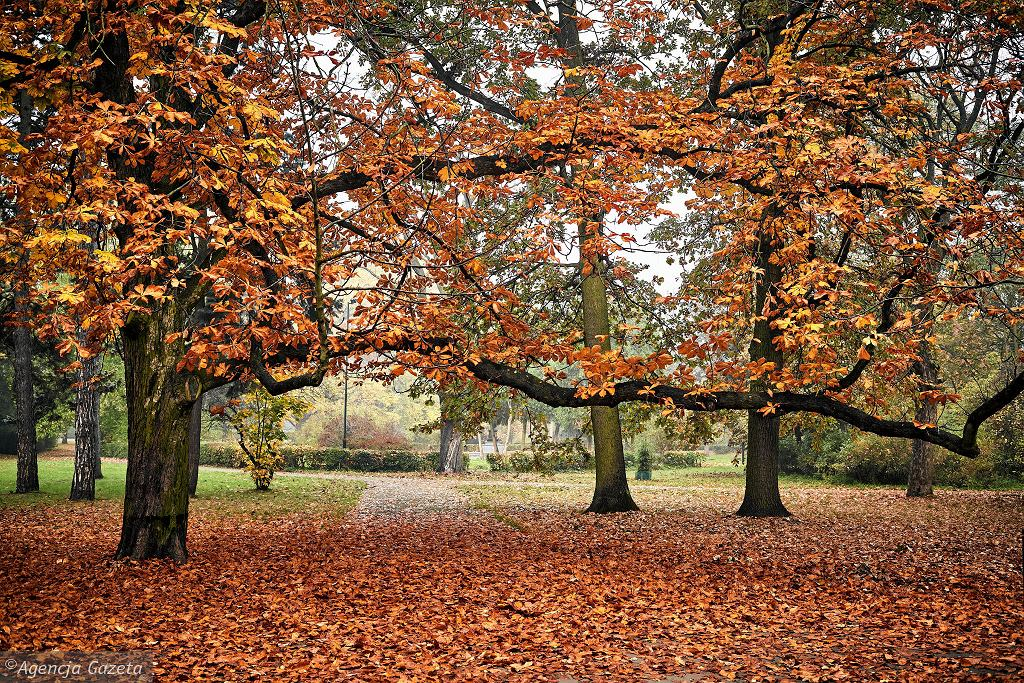 Złota jesień w Parku Poniatowskiego