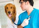 Właściciele zwierząt, jak pokazują badania, są w mniejszym stopniu narażeni na choroby serca.