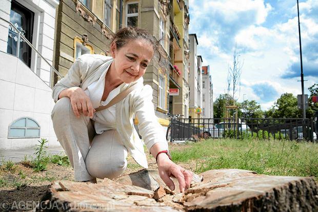 W Szczecinie nie ma miejsca dla drzew. Rzecz o fatalnych praktykach