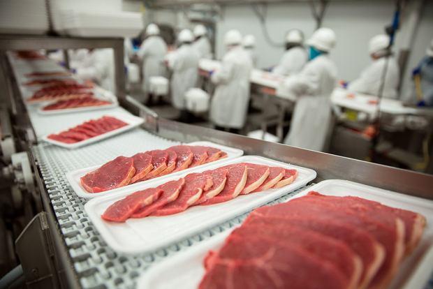 Czyste mięso, mięso z laboratorium za kilka dekad może zastąpić mięso konwencjonalne