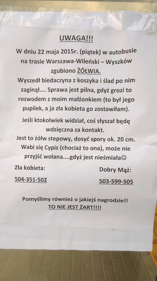 W Warszawie zaginął żółw stepowy