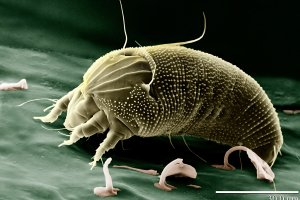 13 insektów, z którymi mieszkasz. Mole i inne
