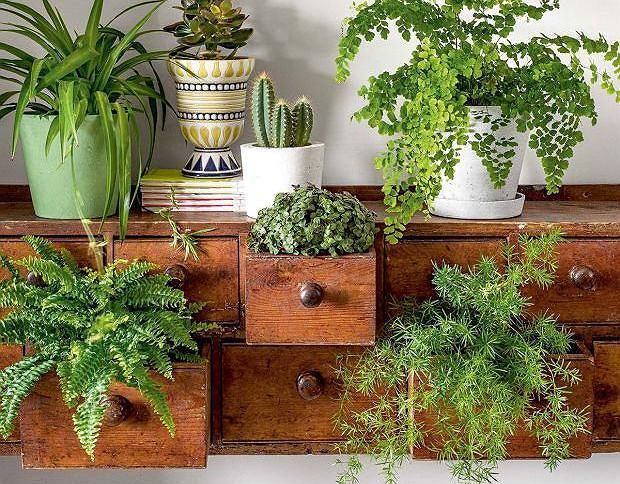 Rośliny doniczkowe w domu