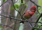 Adam Wajrak: Kiedy ptaki nabra�y kolor�w