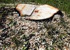 Prawie 100 tys. zł kary dla sióstr z Sandomierza! Za nielegalną wycinkę drzew