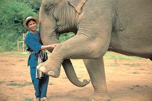Tajlandia - wakacje ze słoniem [EKSKLUZYWNE WYPRAWY]