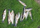 """Potężny pożar w Żywcu katastrofą dla tysięcy ryb. """"Zginęły pstrągi, lipienie, świnki..."""""""