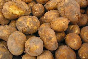 Ziemniaki młode, wczesne czy dojrzałe? Ministerstwo Rolnictwa robi porządek z mylącymi nazwami
