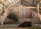 Ogromna plantacja marihuany pod Toruniem [ZDJĘCIA]
