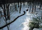 Byli w lesie, gdy ich oczom ukazał się makabryczny widok. Z ziemi wystawały kobiece nogi
