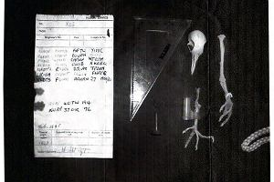 Tajemnica gołębia odkryta?