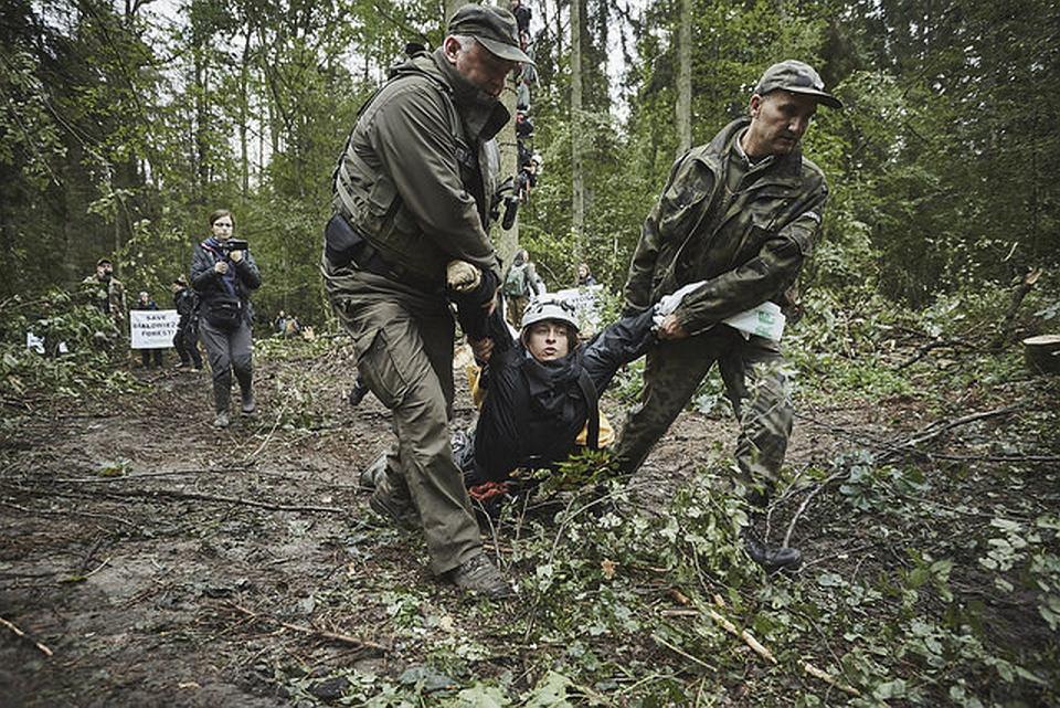 Puszcza Białowieska. Akcja strażników leśnych