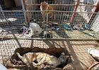 W ZOO w Iraku przez miesiąc nikt nie karmił zwierząt. Przeżyły tylko lew i niedźwiedź [ZDJĘCIA]
